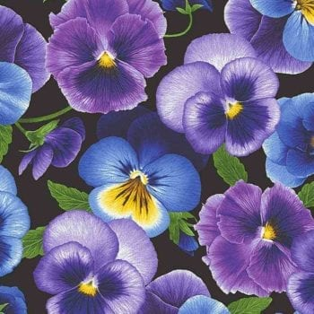 Pansy Paradise – Medium Pansies – C7720